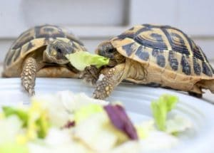 Turtle Feeding Strategies Made Simple and Easy